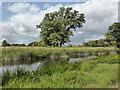 SP2556 : Charlecote Park - River Avon by Chris Allen