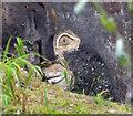 SE4006 : Bird on the rock by Steve  Fareham