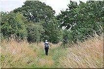 NT8127 : Path near Town Yetholm by Jim Barton