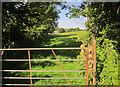 SX3956 : Path to Greeps by Derek Harper