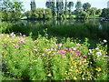 TQ4774 : Cornfield annuals and Danson Park lake by Marathon