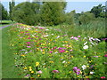 TQ4774 : Wildflower spectacle in Danson Park by Marathon