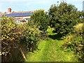 SY3892 : Green lane below Westhay farm by Hugh Craddock