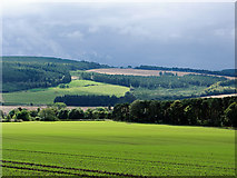 NH6454 : Successful autumn sowing on the Black Isle by Julian Paren