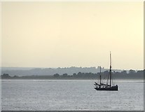 TQ7178 : A sailing trawler in the Thames Estuary by Stefan Czapski
