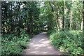 SJ5410 : Woodland Walk at Attingham Park by Jeff Buck