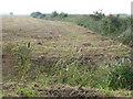 TF2134 : Bulrushes bursting open by Richard Humphrey
