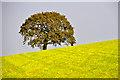 SS8622 : Mid Devon : Grassy Field & Tree by Lewis Clarke
