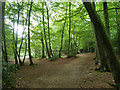 SU9584 : Path, Burnham Beeches by Robin Webster