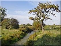 TQ7178 : Marsh ditch near the Poplars by Stefan Czapski