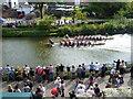 TQ5846 : Dragon Boat Racing on the River Medway at Tonbridge by Marathon