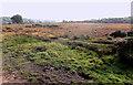 SU2303 : Heathland near Shoot Wood by Mike Smith