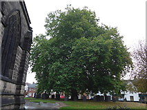 SK5319 : An early morning visit to Loughborough Parish Church (4) by Basher Eyre