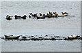 NJ4064 : The seals of Portgordon by Walter Baxter