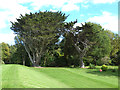 NR3996 : Cypress trees and lawn at Colonsay House by Oliver Dixon