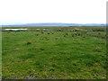 NR2867 : Gruinart RSPB Reserve by Oliver Dixon