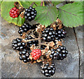 J3479 : Blackberries, Greencastle, Belfast (September 2014) by Albert Bridge