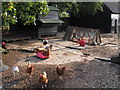 TL8311 : Chickens, Bouncers Farm, Wickham Bishops by Roger Jones