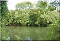 SU9083 : Wooded island in the Thames by N Chadwick