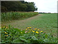TG1627 : Maize crop next to Oulton Belt by Richard Humphrey