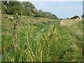 TF1110 : Bulrushes in Greatford Cut by Richard Humphrey