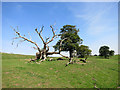 TQ5293 : In Pyrgo Park by Des Blenkinsopp