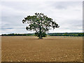 SU7447 : Tree in field by Robin Webster