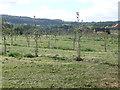 SO6869 : New Orchard, Little Lambswick by Richard Greenwood