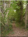 SX4658 : Footpath through the woods on Drake's Hill (1) by David Smith