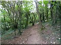 SX4658 : Footpath through the woods on Drake's Hill (3) by David Smith