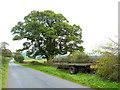 NY5540 : Trailer and oak tree by Oliver Dixon
