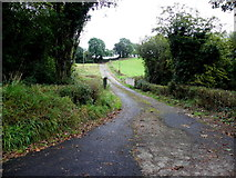 H6458 : Lane, Cravenny Scotch by Kenneth  Allen