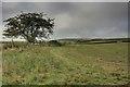 SJ9768 : Field on the Slope of Mount Pleasant by Mick Garratt
