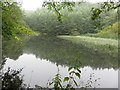 NT7855 : Mill Dam, Duns Castle Nature Reserve by Graham Robson