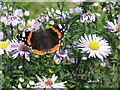 NT2470 : Red Admiral in the Hermitage of Braid by M J Richardson