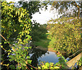 TQ1653 : Hops by the River by Des Blenkinsopp