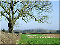 SO7497 : Footpath across fields north of Worfield, Shropshire by Roger  Kidd