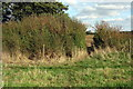 TL0945 : Bridleway goes through the hedge by Philip Jeffrey