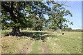 SJ2638 : Footpath on the Chirk Castle Estate by Jeff Buck