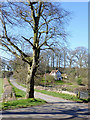 SO7595 : The lane to Allscott near Worfield, Shropshire by Roger  Kidd