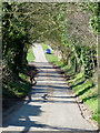 SO7595 : The lane to Allscott, Shropshire by Roger  Kidd