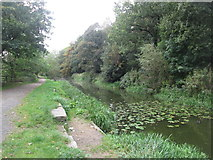 SD9201 : Hollinwood Branch Canal west of Bardsley Bridge by John Slater