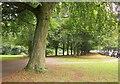 ST5673 : The Promenade, Clifton Down by Derek Harper