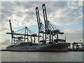 TQ7381 : London Gateway Container Port, Essex by Christine Matthews