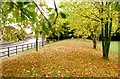 SO8652 : An autumnal view of the bund beside St Peter's drive by Andrew Darge
