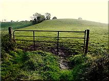 H6556 : Gate, Skey by Kenneth  Allen