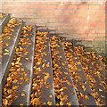 SP3165 : Fallen beech leaves on York Walk steps, Royal Leamington Spa by Robin Stott