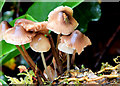 J4078 : Fungi, Glenlyon, Holywood (October 2014) by Albert Bridge