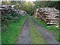 TQ0649 : Wood stacks, Netherlands by Alan Hunt