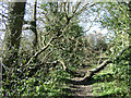 SP0576 : Legacy of recent storms, footpath north of Bell Green by Robin Stott